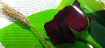 Nuestras recomendaciones literarias de energía para Sant Jordi