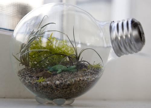 Haz un terrario con tus viejas bombillas convencionales