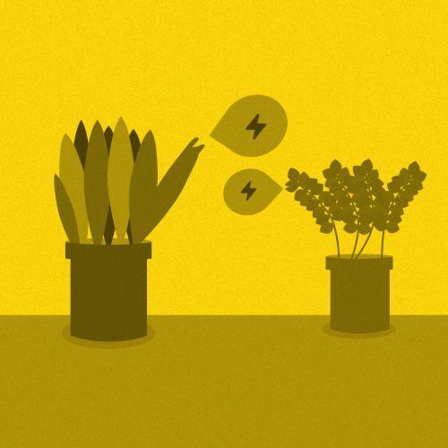 El lenguaje eléctrico de las plantas